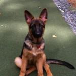 Seager von den Oher Tannen, 5 months